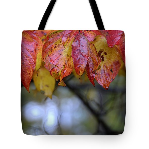 Dogwood 1 Tote Bag