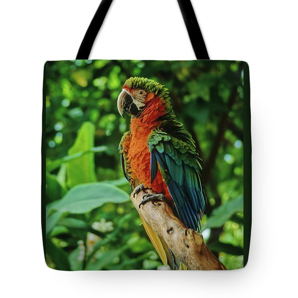 Tote Bag featuring the photograph Don't Ruffle My Feathers by Marie Hicks