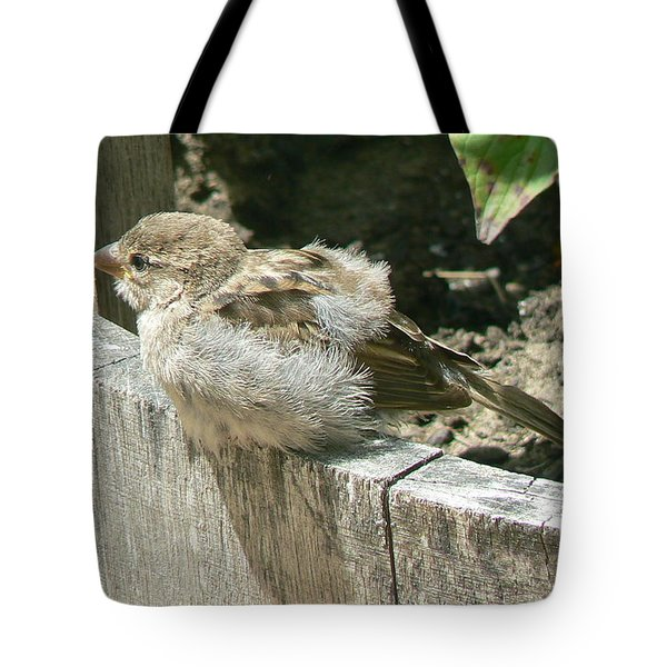 Downy Nestling Tote Bag by Pamela Patch