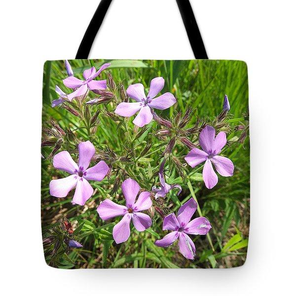 Downy Phlox Tote Bag by Scott Kingery