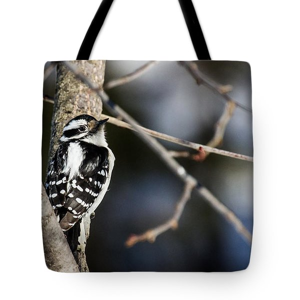 Tote Bag featuring the photograph Downy Woodpecker by Dan Traun