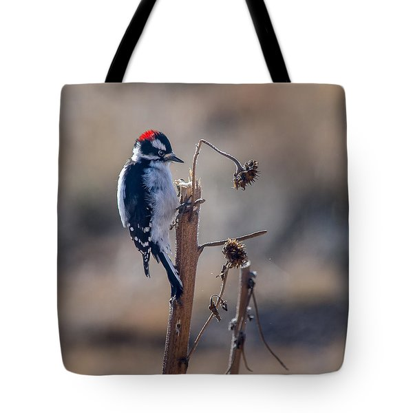 Downy Woodpecker Finding Insects From Sunflower Stem. Tote Bag by John Brink