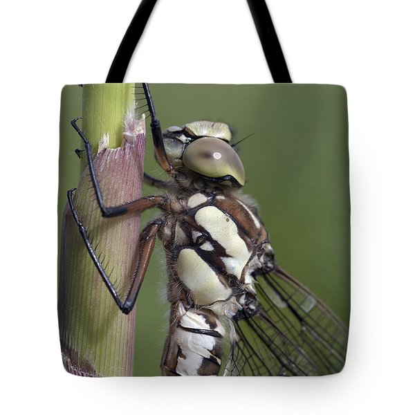 Dragon Fly Tote Bag by Michal Boubin
