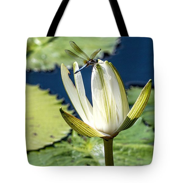 Dragonfly Tote Bag by Susi Stroud