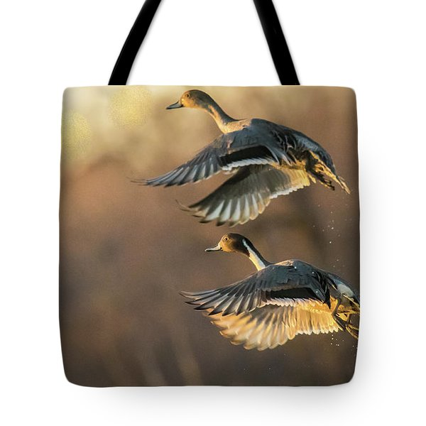 Tote Bag featuring the photograph Drake And Hen Pintail  by Kelly Marquardt