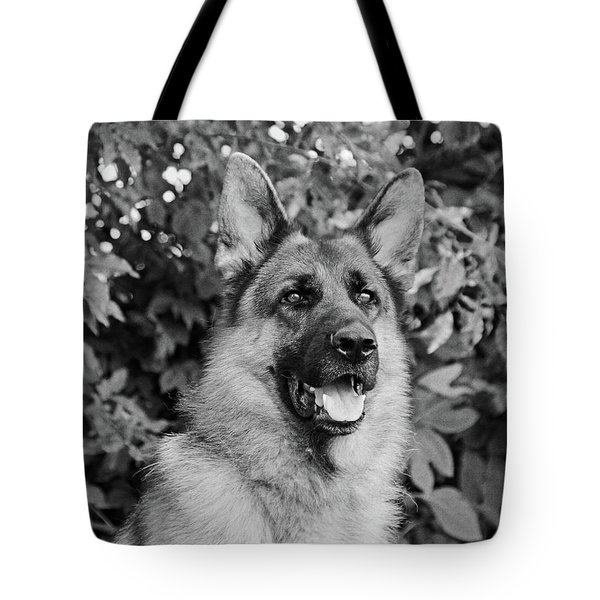 Tote Bag featuring the photograph Drake Watching by Sandy Keeton