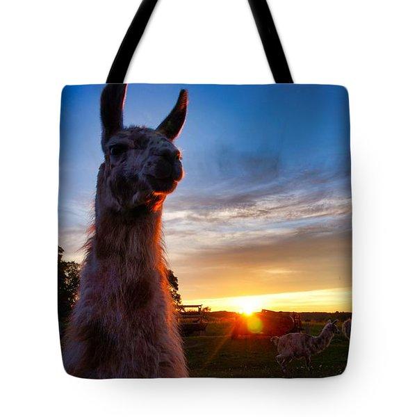 Drama Llamas Tote Bag