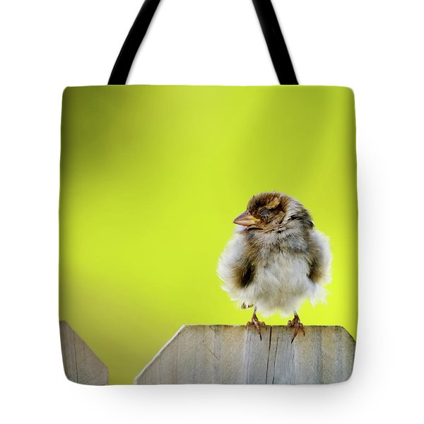 Dream Sparrow Tote Bag by Betty LaRue