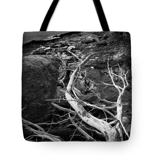 Driftwood Tree, La Verna Preserve, Bristol, Maine  -20999-30003 Tote Bag