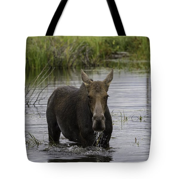 Drooling Cow Moose Tote Bag