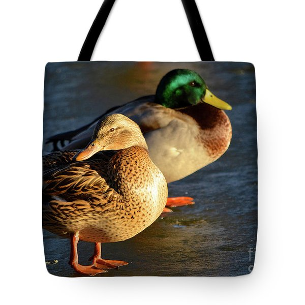 Duck Pair Sunbathing On Frozen Lake Tote Bag