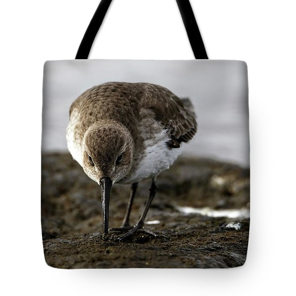 Dunlin On The Mudflat Tote Bag
