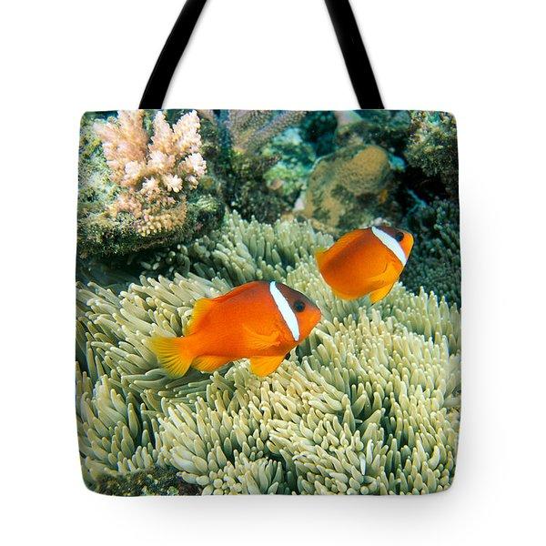 Dusky Clownfish Tote Bag