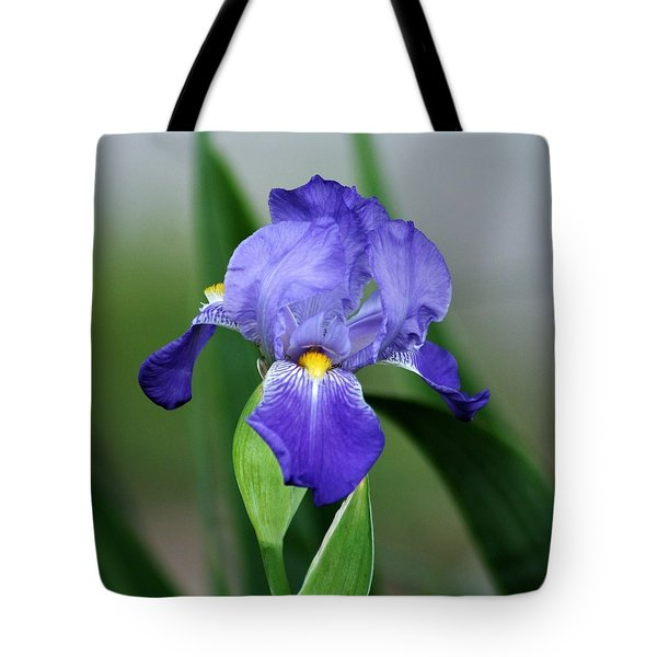 Dwarf Iris 9834_2 Tote Bag
