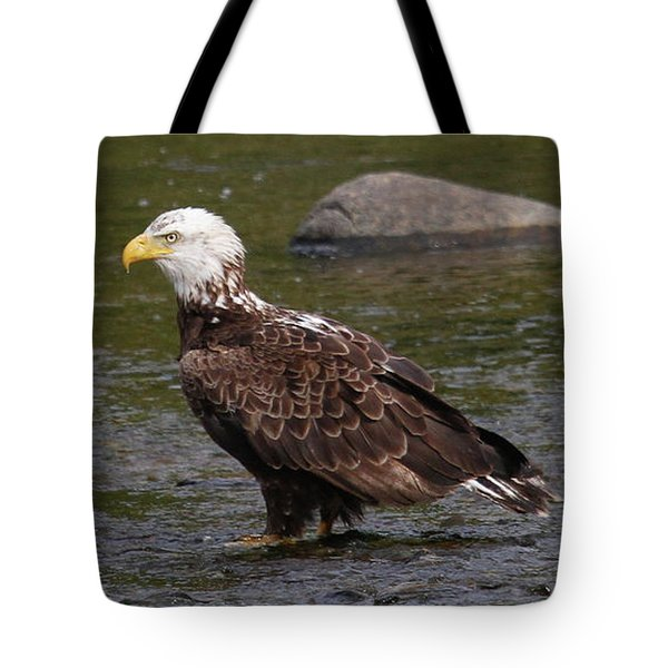 Tote Bag featuring the photograph Eagle Deep In Thought by Debbie Stahre