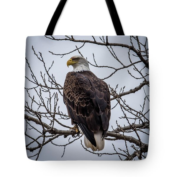 Tote Bag featuring the photograph Eagle Perched by Paul Freidlund