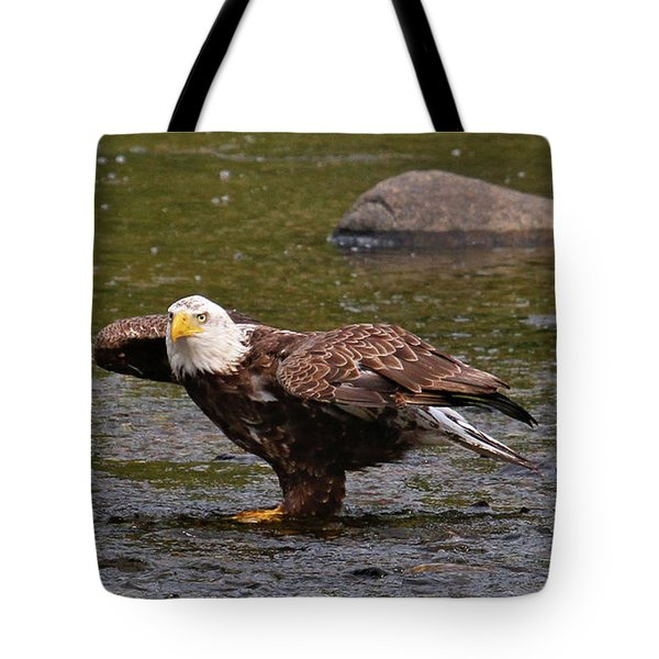 Tote Bag featuring the photograph Eagle Prepares For Take-off by Debbie Stahre