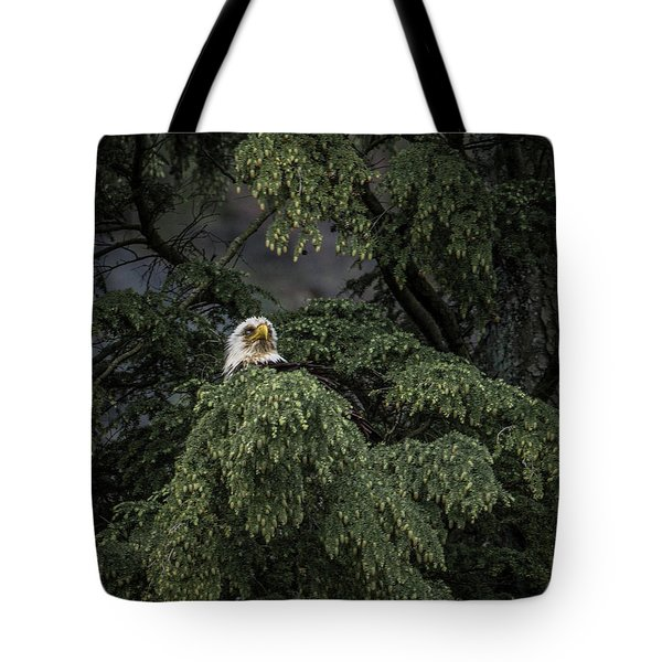 Eagle Tree Tote Bag by Timothy Latta