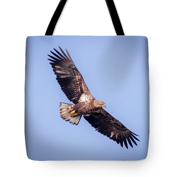 Tote Bag featuring the photograph Eagle Watch 2018 - Third Year Bald Eagle  by Ricky L Jones