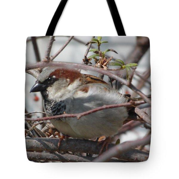 Early Bird Tote Bag