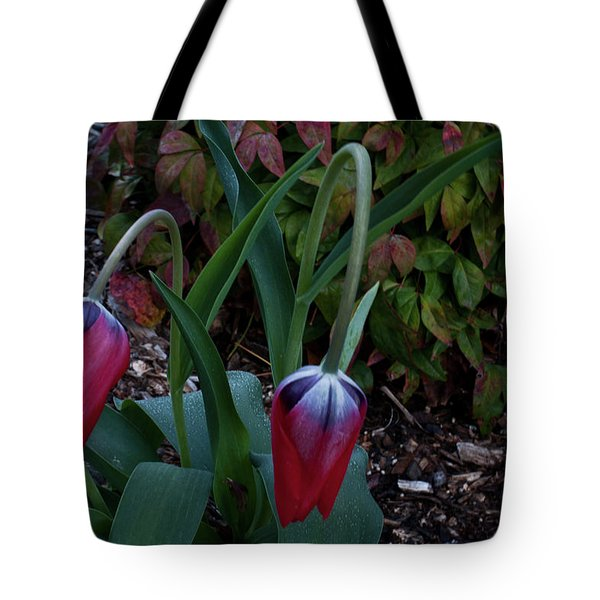 Early Morning Nodding Tulips Tote Bag