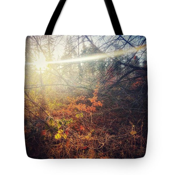 Early Morning Winter Sun Tote Bag