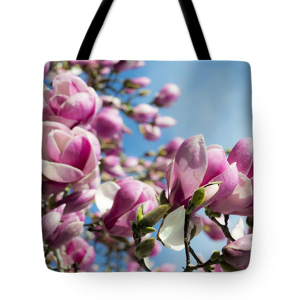 Early Spring Magnolia Tote Bag