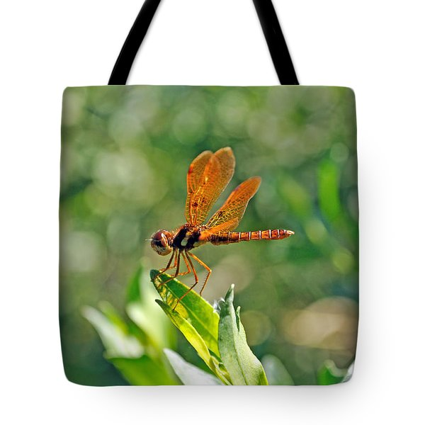 Eastern Amber Wing Dragonfly Tote Bag by Kenneth Albin