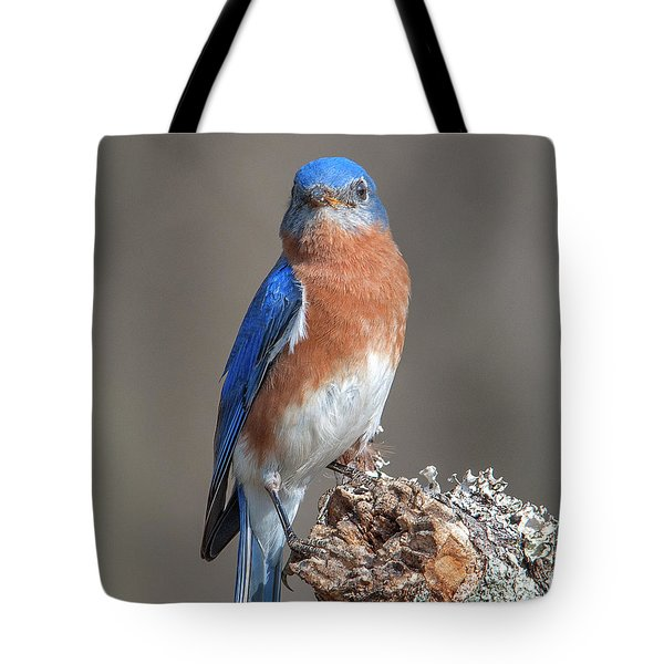 Eastern Bluebird Dsb0300 Tote Bag