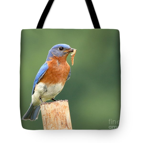 Tote Bag featuring the photograph Eastern Bluebird With Caterpillar Lunch by Max Allen