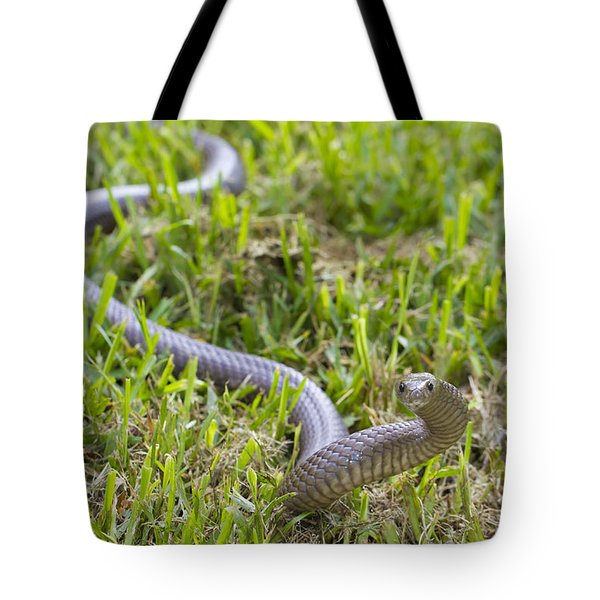 Eastern Brown Snake Tote Bag
