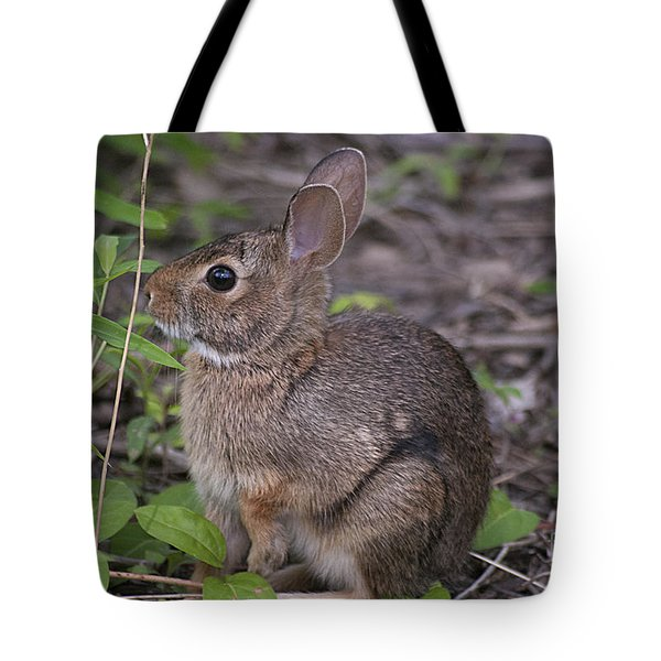 Eastern Cottontail 20120624_11a Tote Bag by Tina Hopkins