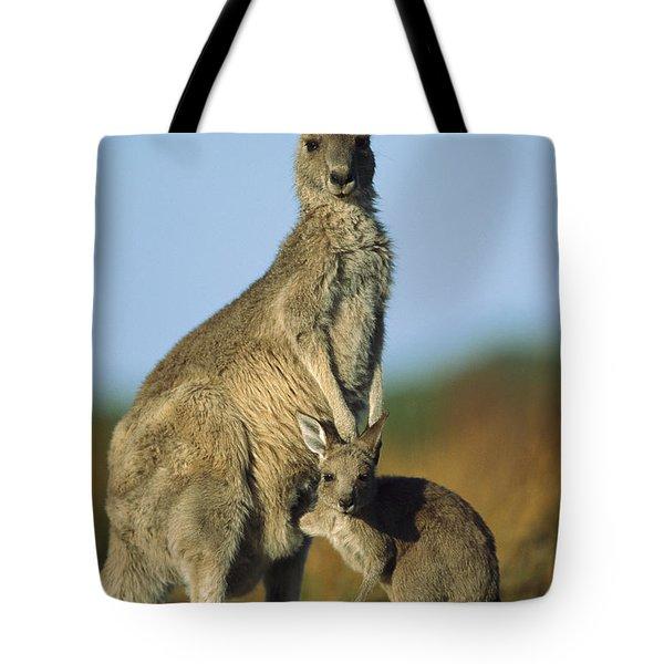 Eastern Grey Kangaroo And Her Joey Tote Bag by Ingo Arndt