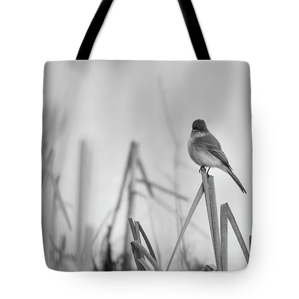 Eastern Phoebe 2017 Tote Bag by Thomas Young