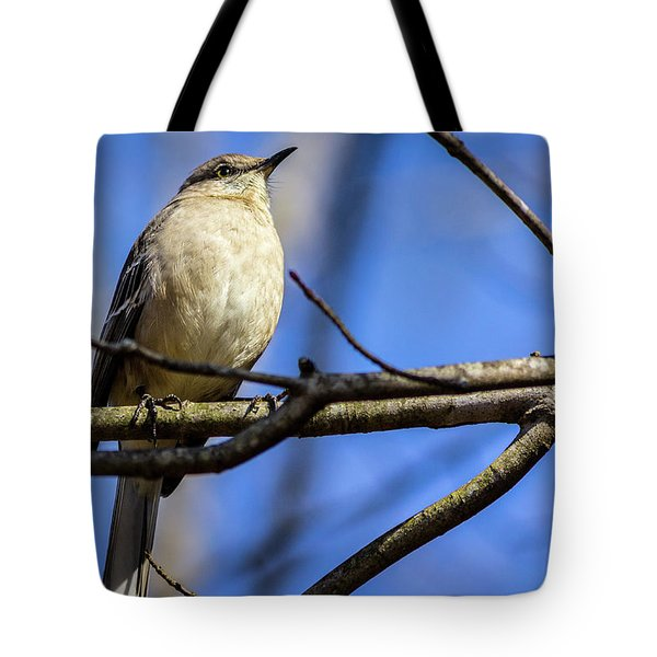 Eastern Phoebe Tote Bag