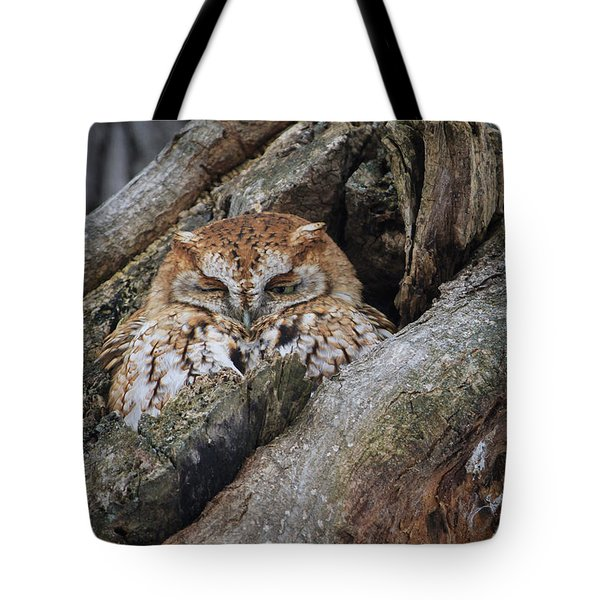 Eastern Screech Owl 2 Tote Bag by Gary Hall