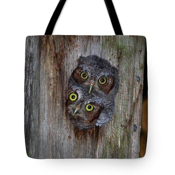 Eastern Screech Owl Chicks Tote Bag