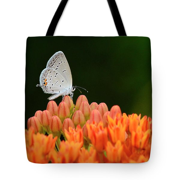 Eastern Tailed Blue On Butterfly Weed Tote Bag