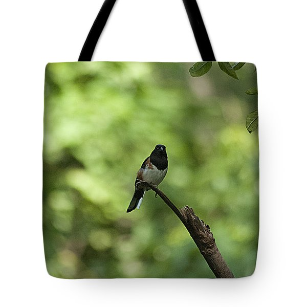Tote Bag featuring the photograph Eastern Towhee 20120707_52a by Tina Hopkins