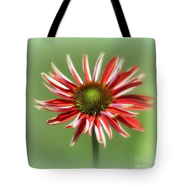 Tote Bag featuring the photograph Echanacea  by Irina Hays