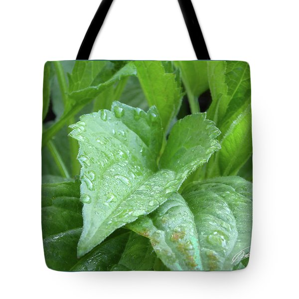 Echinacea After The Rain I Tote Bag