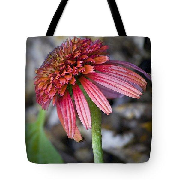 Echinacea Hot Papaya Tote Bag by Teresa Mucha