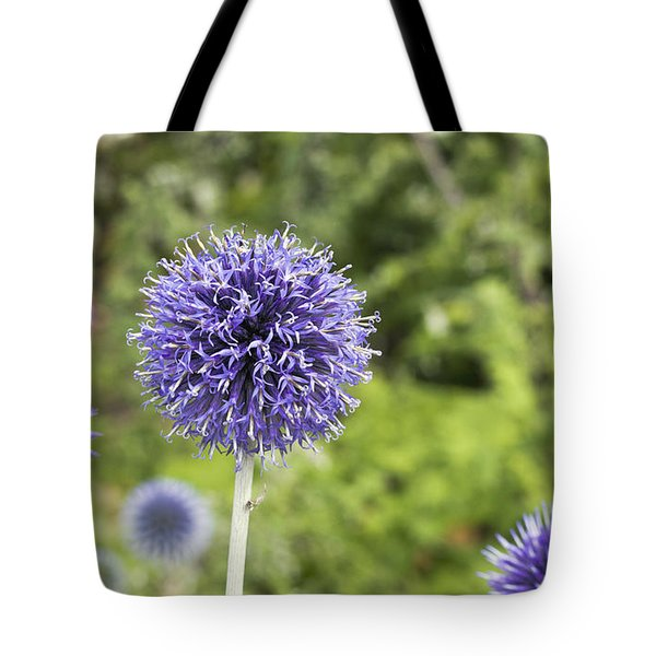 Tote Bag featuring the photograph Curious Echinop Peeking At The Camera by Helga Novelli