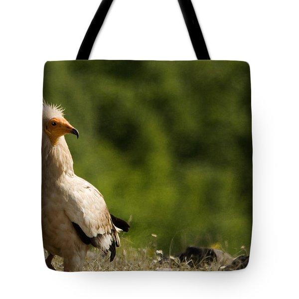 Egyptain Vulture  Tote Bag