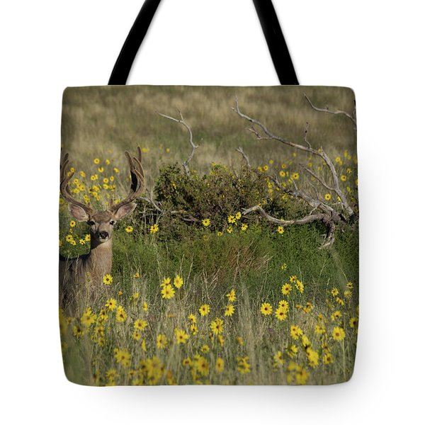 Eight Point Buck In The Grass Lands Of The Great Sand Dunes Tote Bag