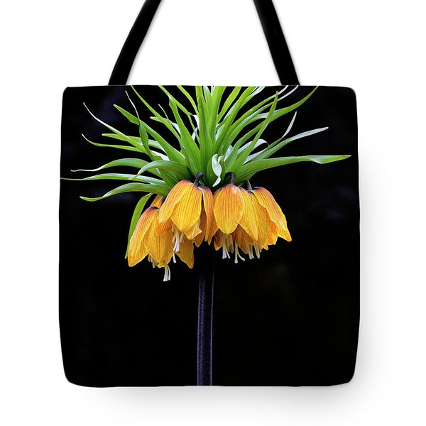 Tote Bag featuring the photograph Elegance by Elvira Butler