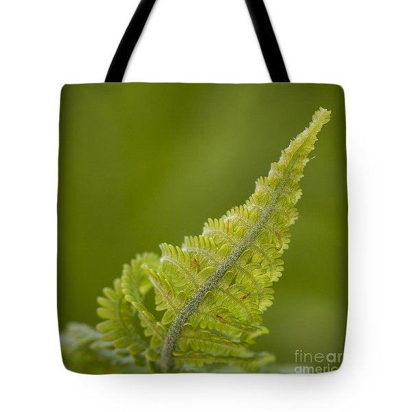 Elegant Fern. Tote Bag by Clare Bambers