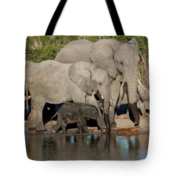 Elephant 3 Tote Bag
