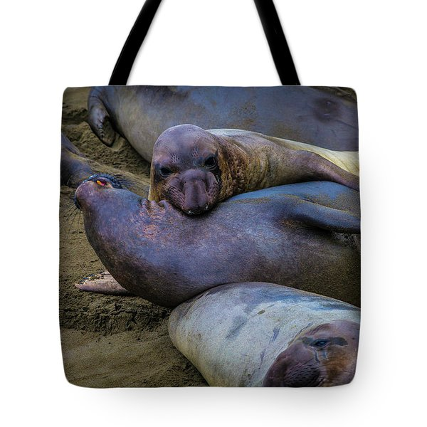 Elephant Seals Fighting Tote Bag