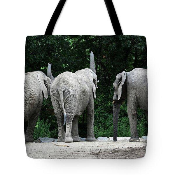 Elephant Trio Tote Bag by Karol Livote